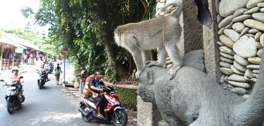 Entrance to the Monkey forest, Ubud, December 2014. Photo by Geoff Vivian